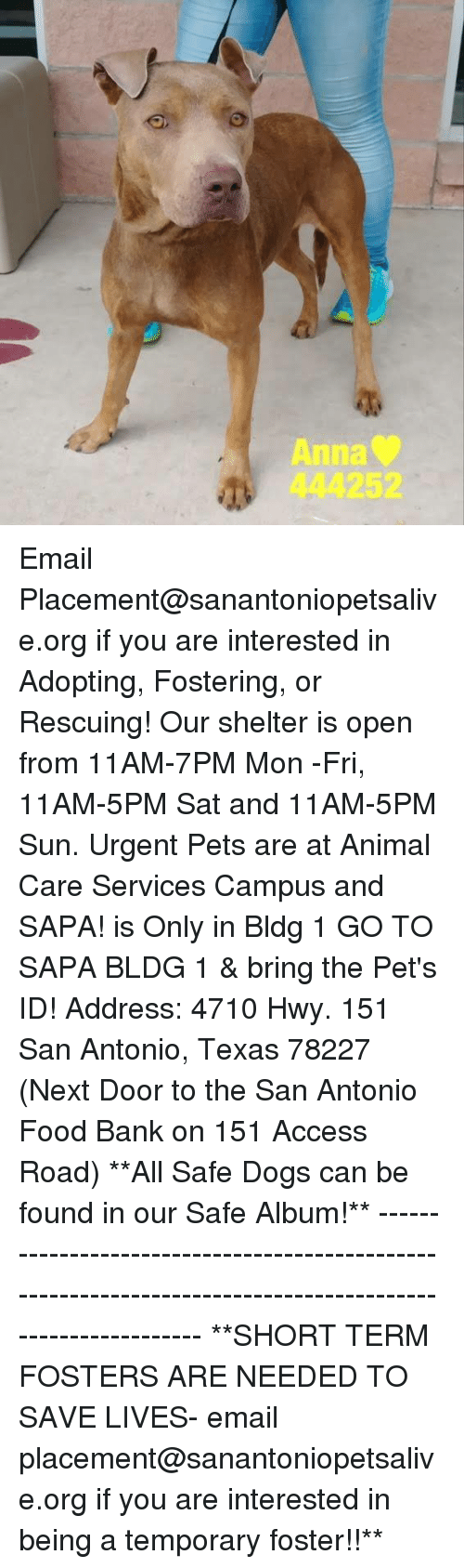 Anna, Dogs, and Food: Anna  444252 Email Placement@sanantoniopetsalive.org if you are interested in Adopting, Fostering, or Rescuing!  Our shelter is open from 11AM-7PM Mon -Fri, 11AM-5PM Sat and 11AM-5PM Sun.  Urgent Pets are at Animal Care Services Campus and SAPA! is Only in Bldg 1 GO TO SAPA BLDG 1 & bring the Pet's ID! Address: 4710 Hwy. 151 San Antonio, Texas 78227 (Next Door to the San Antonio Food Bank on 151 Access Road)  **All Safe Dogs can be found in our Safe Album!** ---------------------------------------------------------------------------------------------------------- **SHORT TERM FOSTERS ARE NEEDED TO SAVE LIVES- email placement@sanantoniopetsalive.org if you are interested in being a temporary foster!!**