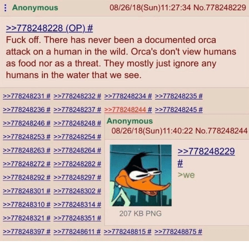 orca: Anonymous  08/26/18(Sun)11:27:34 No.778248229  2778248228 (OP) #  Fuck off. There has never been a documented orca  attack on a human in the wild. Orca's don't view humans  as food nor as a threat. They mostly just ignore any  humans in the water that we see.  >>778248231 # >>778248232 # >-778248234 # >>778248235 #  >-778248236 # >>778248237 # >>778248244 # >>778248245 #  >>778248246 #2778248248# Anonymous  >-778248253 #>-778248254 #  >>778248263 # >>778248264 #  >-778248272 # >-778248282 #  22778248292 # >-778248297 #  >-778248301 # >-778248302 #  >-778248310 # >-778248314 #  2778248321 # >-778248351 #  >>778248397 # >>778248611 # >>778248815 # >>778248875 #  08/26/18(Sun)11:40:22 No.778248244  >778248229  >we  207 KB PNG