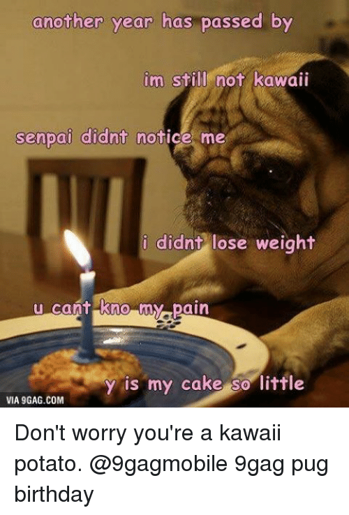 A Kawaii Potato: another year has passed by  im still not kawaii  senpai didnt notice me  i didnt lose weight  u cant kno my pain  y is my cake so little  VIA 9GAG.COM Don't worry you're a kawaii potato. @9gagmobile 9gag pug birthday