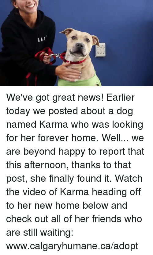 Found It: ANp/ We've got great news! Earlier today we posted about a dog named Karma who was looking for her forever home. Well... we are beyond happy to report that this afternoon, thanks to that post, she finally found it. Watch the video of Karma heading off to her new home below and check out all of her friends who are still waiting: www.calgaryhumane.ca/adopt