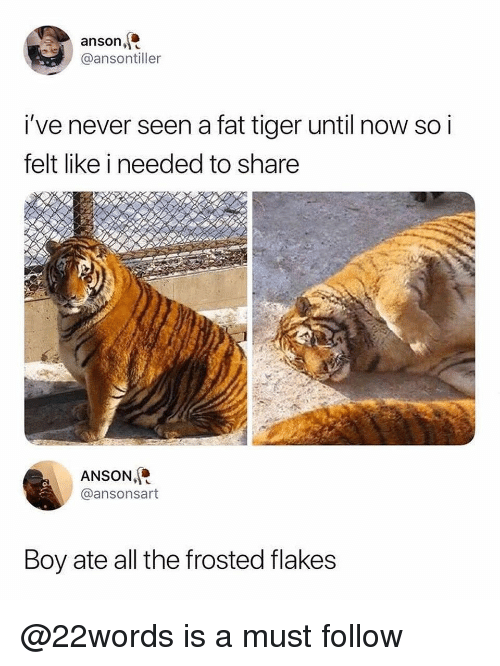 Memes, Tiger, and Fat: anson,  @ansontiller  i've never seen a fat tiger until now so i  felt like i needed to share  ANSON,  @ansonsart  Boy ate all the frosted flakes @22words is a must follow