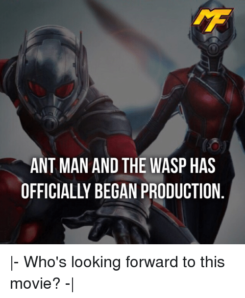 the wasp: ANT MAN AND THE WASP HAS  OFFICIALLY BEGAN PRODUCTION |- Who's looking forward to this movie? -|