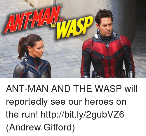 the wasp: ANTHAN  MAS  THE ANT-MAN AND THE WASP will reportedly see our heroes on the run! http://bit.ly/2gubVZ6  (Andrew Gifford)
