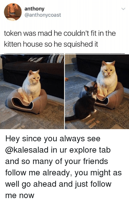 Friends, Memes, and House: anthony  @anthonycoast  token was mad he couldn't fit in the  kitten house so he squished it Hey since you always see @kalesalad in ur explore tab and so many of your friends follow me already, you might as well go ahead and just follow me now