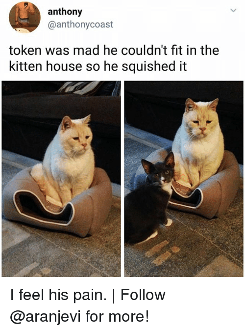 Pained: anthony  @anthonycoast  token was mad he couldn't fit in the  kitten house so he squished it  t衝 I feel his pain. | Follow @aranjevi for more!