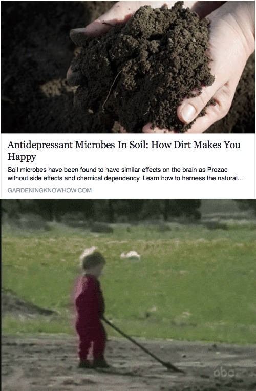 Antidepressant: Antidepressant Microbes In Soil: How Dirt Makes You  Happy  Soil microbes have been found to have similar effects on the brain as Prozac  without side effects and chemical dependency. Learn how to harness the natural...  GARDENINGKNOWHOW.COM