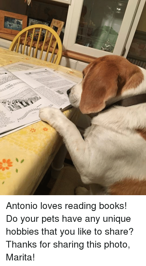 Memes, 🤖, and Thanks for Sharing: Antonio loves reading books! Do your pets have any unique hobbies that you like to share?  Thanks for sharing this photo, Marita!
