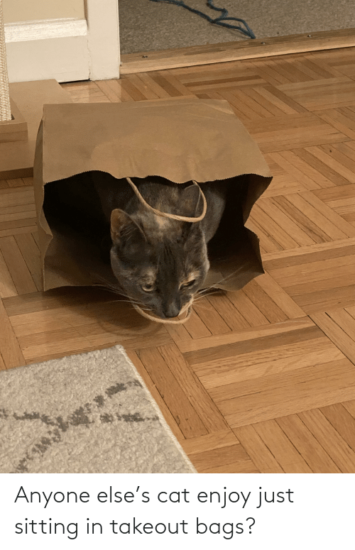 bags: Anyone else's cat enjoy just sitting in takeout bags?