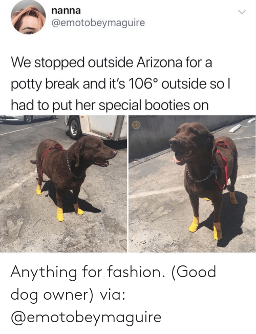 anything: Anything for fashion. (Good dog owner) via: @emotobeymaguire