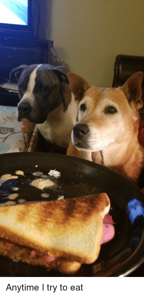 Eat,  Anytime, and I Try: Anytime I try to eat
