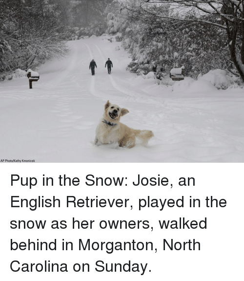 kathy: AP Photo/Kathy Kmonicek Pup in the Snow: Josie, an English Retriever, played in the snow as her owners, walked behind in Morganton, North Carolina on Sunday.