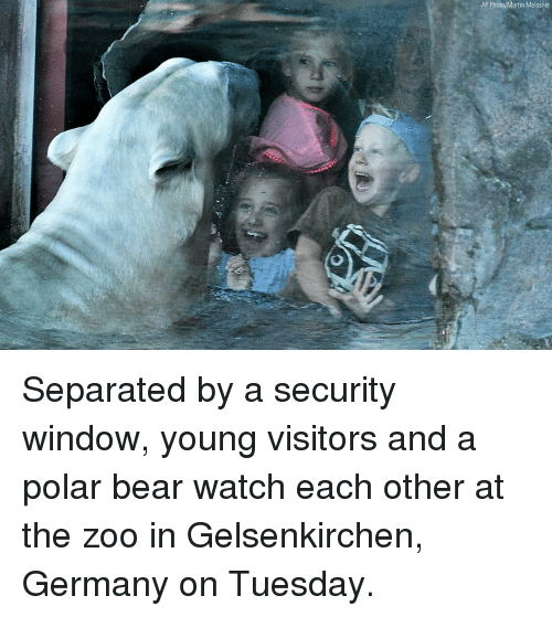 Martin, Memes, and Bear: AP Photo/Martin Meissner Separated by a security window, young visitors and a polar bear watch each other at the zoo in Gelsenkirchen, Germany on Tuesday.