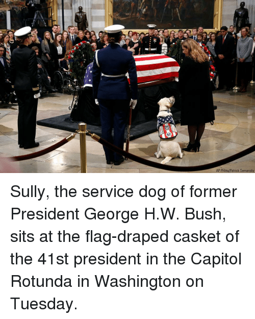 Casket: AP Photo/Patrick Semansky Sully, the service dog of former President George H.W. Bush, sits at the flag-draped casket of the 41st president in the Capitol Rotunda in Washington on Tuesday.