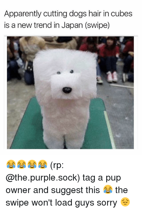Apparently, Dogs, and Funny: Apparently cutting dogs hair in cubes  is a new trend in Japan (swipe) 😂😂😂😂 (rp: @the.purple.sock) tag a pup owner and suggest this 😂 the swipe won't load guys sorry 😔