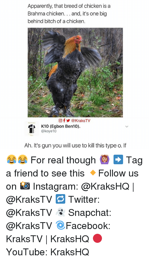 Memes, 🤖, and Gun: Apparently, that breed of chicken is a  Brahma chicken  and, it's one big  behind bitch of a chicken.  Of KraksTV  K10 (Egbon Ben10).  @koye 10  Ah. It's gun you will use to kill this type o. If 😂😂 For real though 🙆🏽 ➡️ Tag a friend to see this 🔸Follow us on 📸 Instagram: @KraksHQ | @KraksTV 🔁 Twitter: @KraksTV 👻 Snapchat: @KraksTV 🌀Facebook: KraksTV | KraksHQ 🔴 YouTube: KraksHQ