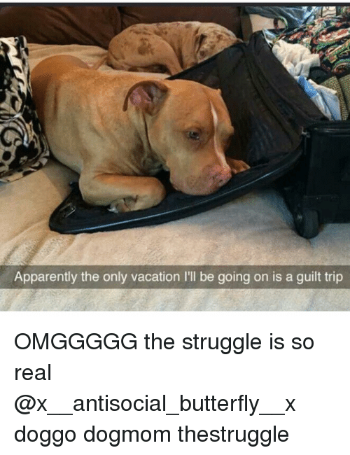 Memes, Butterfly, and Vacation: Apparently the only vacation l'll be going on is a guilt trip OMGGGGG the struggle is so real @x__antisocial_butterfly__x doggo dogmom thestruggle