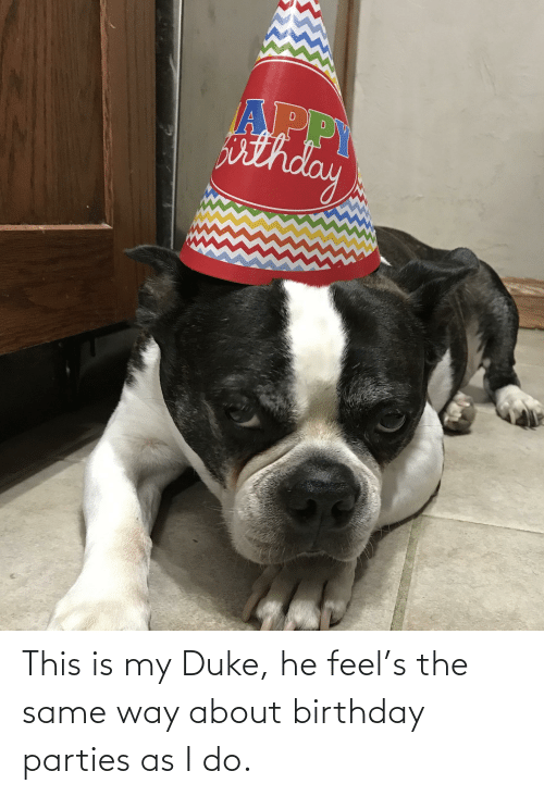 birthday parties: APPY  isthde This is my Duke, he feel's the same way about birthday parties as I do.