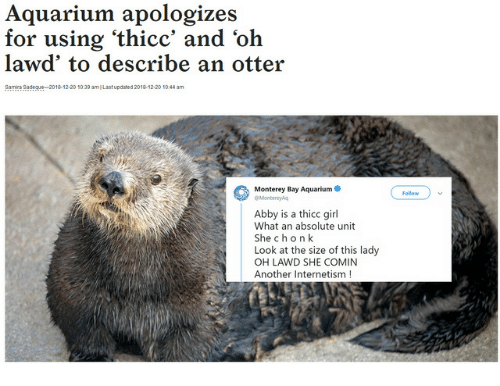 ami: Aquarium apologizes  for using 'thicc' and 'oh  lawd' to describe an otter  Samra Sadegue 2018-12.20 1039 amI Last updated 2018-12-20 1044 am  Monterey Bay Aquarium  Follow  Montereysq  Abby is a thicc girl  What an absolute unit  She chon k  Look at the size of this lady  OH LAWD SHE COMIN  Another Internetism!