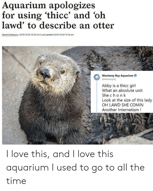 ami: Aquarium apologizes  for using 'thicc' and 'oh  lawd' to describe an otter  Samira Sadeque-2018-12-20 10:39 amI Last updated 2018-12-20 1044 am  Monterey Bay Aquarium  eMontereyAq  Abby is a thicc girl  What an absolute unit  She chon k  Look at the size of this lady  OH LAWD SHE COMIN  Another Internetism! I love this, and I love this aquarium I used to go to all the time