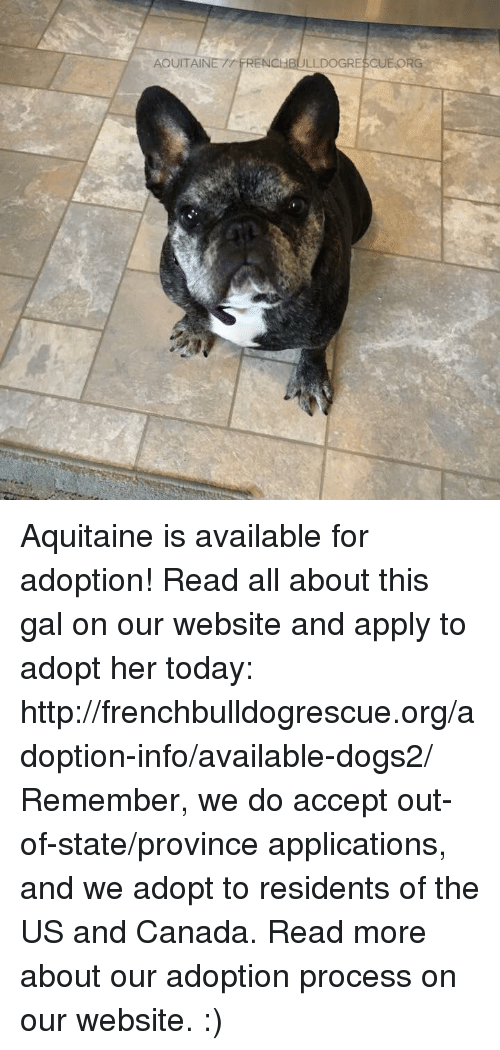 us-and-canada: AQUITAIN  RENCHBULLDOGRESCUEORG Aquitaine is available for adoption! Read all about this gal on our website <location, likes, dislikes> and apply to adopt her today: http://frenchbulldogrescue.org/adoption-info/available-dogs2/  Remember, we do accept out-of-state/province applications, and we adopt to residents of the US and Canada. Read more about our adoption process on our website. :)