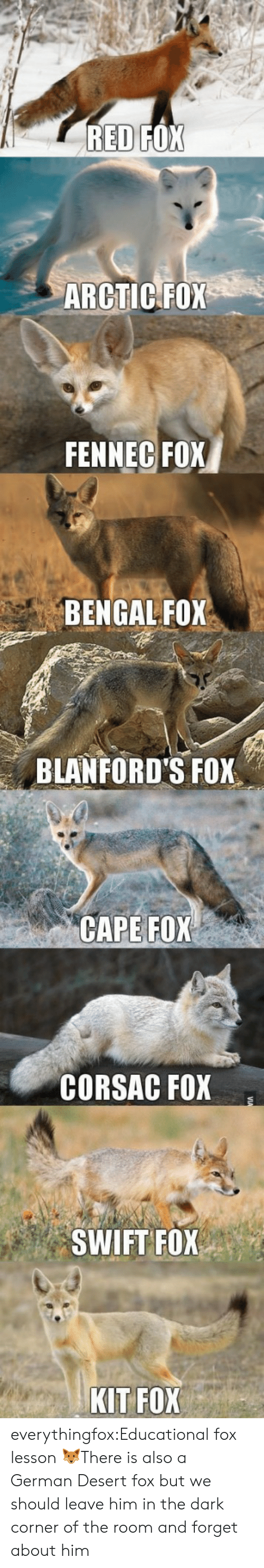 cape: ARCTIC FOX  FENNEC FOX  BENGAL FOX  BLANFORD'S FOX  CAPE FOX  CORSAC FOX  SWIFT FOX  KIT FOX everythingfox:Educational fox lesson 🦊There is also a German Desert fox but we should leave him in the dark corner of the room and forget about him