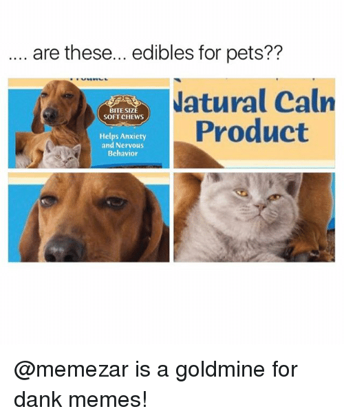 Dank, Funny, and Meme: are these... edibles for pets??  atural Caln  Product  BITE SIZE  SOFT CHEWS  Helps Anxiety  and Nervous  Behavior @memezar is a goldmine for dank memes!