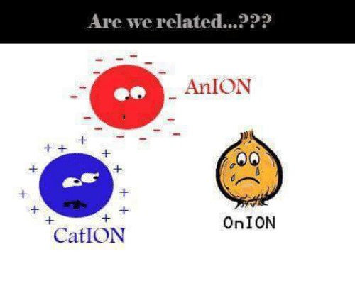 Onion, Espanol, and International: Are we related...PPP  An ION  OnION  Cat ION