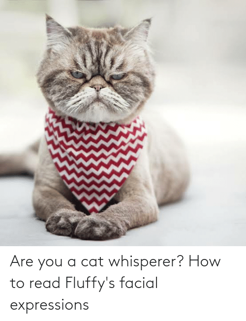Expressions: Are you a cat whisperer? How to read Fluffy's facial expressions