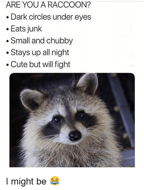 chubby: ARE YOU A RACCOON?  . Dark circles under eyes  .Eats junk  . Small and chubby  . Stays up all night  Cute but will fight I might be 😂