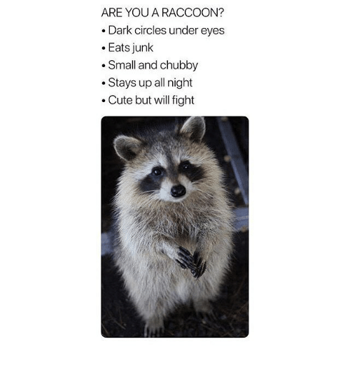 chubby: ARE YOU A RACCOON?  .Dark circles under eyes  .Eats junk  .Small and chubby  .Stays up all night  . Cute but will fight