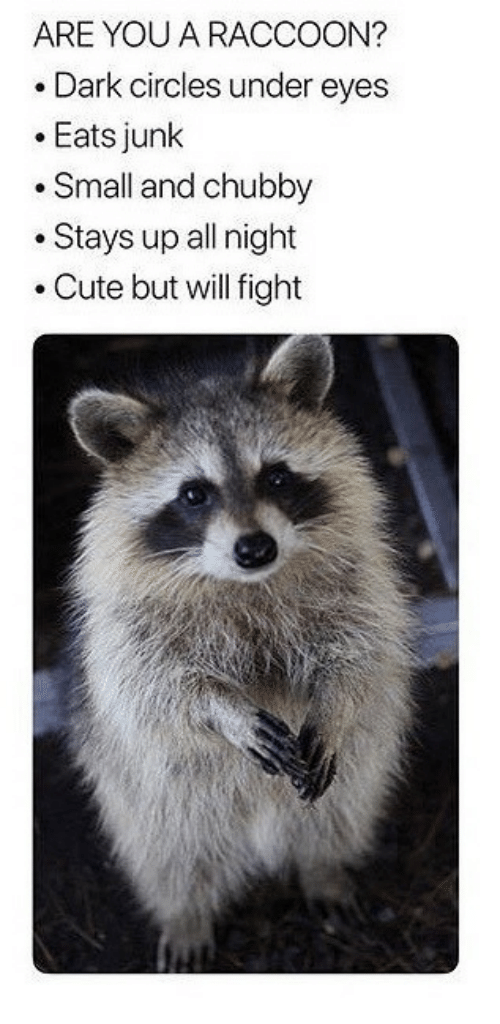 chubby: ARE YOU A RACCOON?  .Dark circles under eyes  .Eats junk  .Small and chubby  .Stays up all night  .Cute but will fight