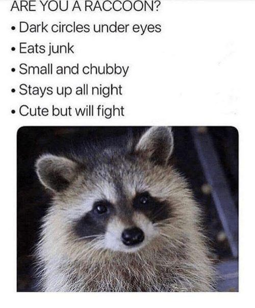 chubby: ARE YOU A RACCOON?  Dark circles under eyes  .Eats junk  Small and chubby  .Stays up all night  .Cute but will fight