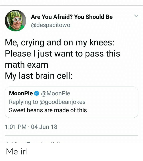moonpie: Are You Afraid? You Should Be  @despacitowo  Me, crying and on my knees  Please I just want to pass this  math exam  My last brain cell  MoonPie @MoonPie  Replying to @goodbeanjokes  Sweet beans are made of this  1:01 PM 04 Jun 18 Me irl