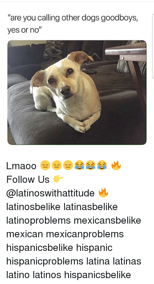 """Dogs, Latinos, and Memes: """"are you calling other dogs goodboys,  yes or no"""" Lmaoo 😑😑😑😂😂😂 🔥 Follow Us 👉 @latinoswithattitude 🔥 latinosbelike latinasbelike latinoproblems mexicansbelike mexican mexicanproblems hispanicsbelike hispanic hispanicproblems latina latinas latino latinos hispanicsbelike"""