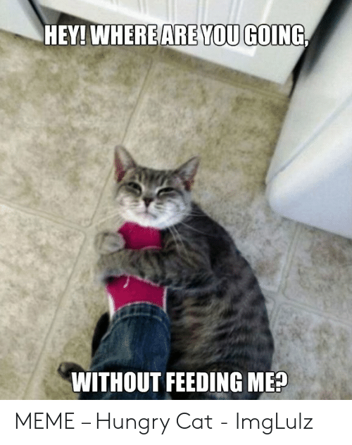 Funny Hungry Memes: ARE YOU GOING  HEY! WHERE  WITHOUT FEEDING ME? MEME – Hungry Cat - ImgLulz