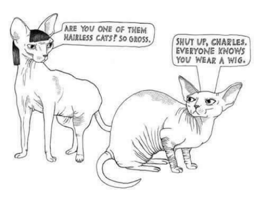 Cats, Shut Up, and Ups: ARE YOU ONE OF THEM  HAIRLESS CATS? So GROSS.  SHUT UP CNARLES.  EVERYONE KNOWS  YOU WEAR A WIG