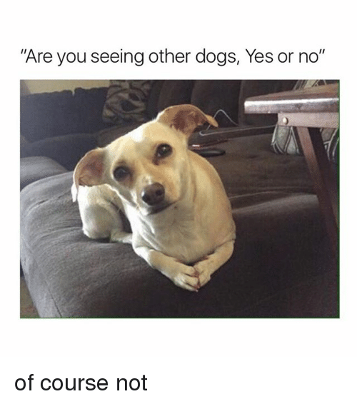 """Dogs, Girl Memes, and Yes: """"Are you seeing other dogs, Yes or no"""" of course not"""