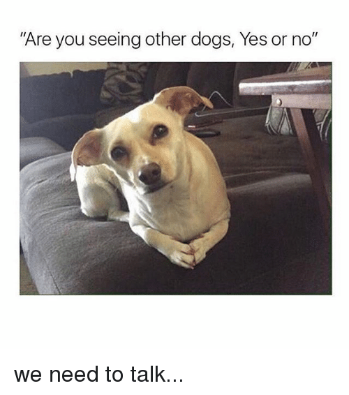 """Dogs, Relatable, and Yes: Are you seeing other dogs, Yes or no"""" we need to talk..."""