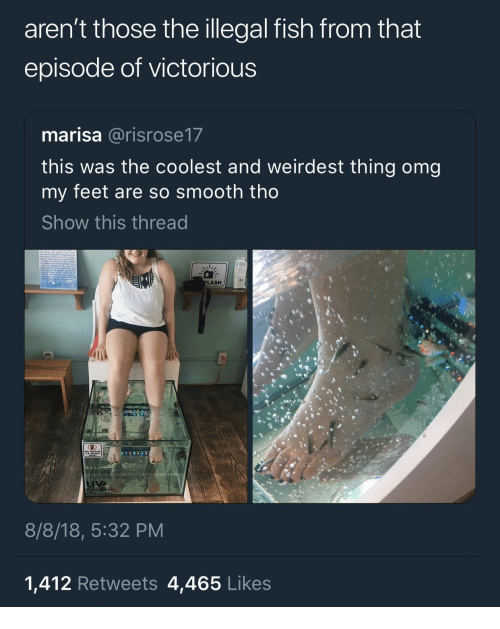 Omg, Smooth, and Fish: aren't those the illegal fish from that  episode of victorious  marisa @risrose17  this was the coolest and weirdest thing omg  my feet are so smooth tho  Show this thread  LASH  8/8/18, 5:32 PM  1,412 Retweets 4,465 Likes