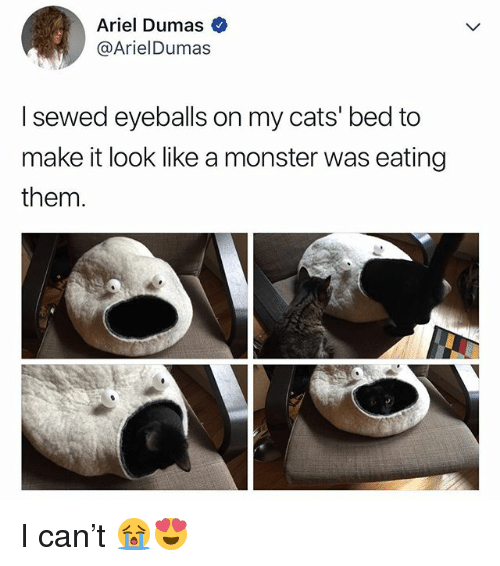 Ariel, Cats, and Monster: Ariel Dumas  @ArielDumas  I sewed eyeballs on my cats' bed to  make it look like a monster was eating  them I can't 😭😍