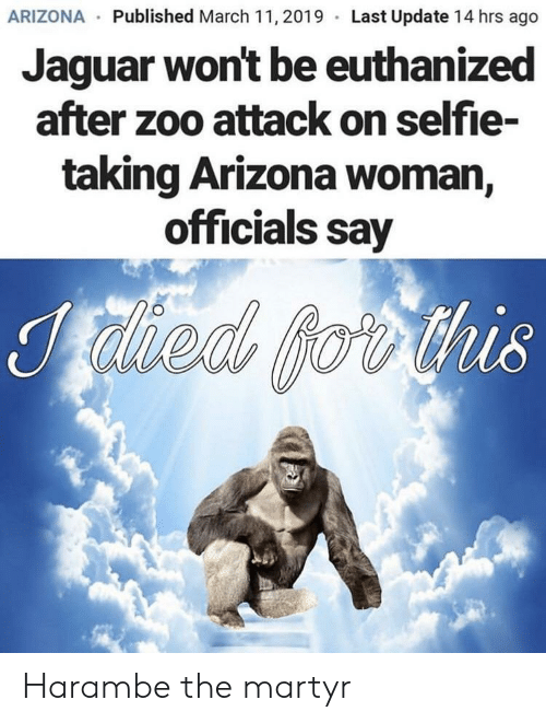 Harambe: ARIZONA Published March 11,2019 Last Update 14 hrs ago  Jaguar won't be euthanized  after zoo attack on selfie-  taking Arizona woman  officials say  218 Harambe the martyr