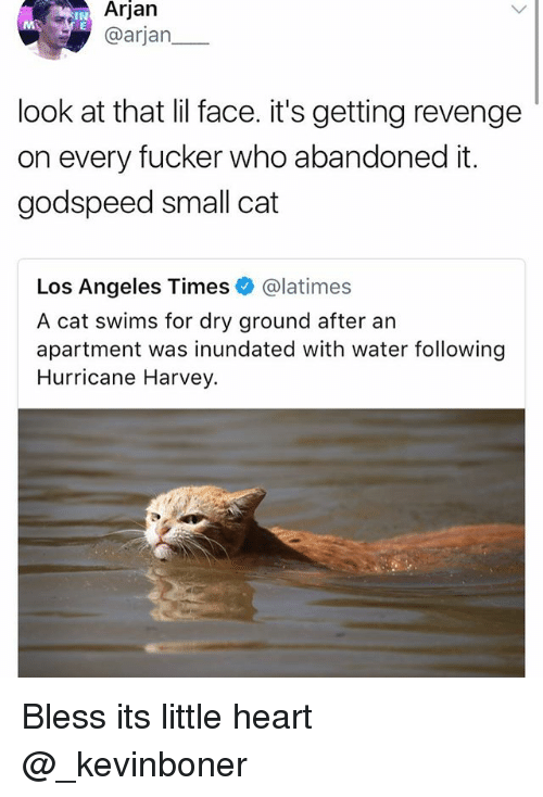 Funny, Meme, and Revenge: Arjan  @arjan  IN  look at that lil face. it's getting revenge  on every fucker who abandoned it.  godspeed small cat  Los Angeles Times @latimes  A cat swims for dry ground after an  apartment was inundated with water following  Hurricane Harvey. Bless its little heart @_kevinboner
