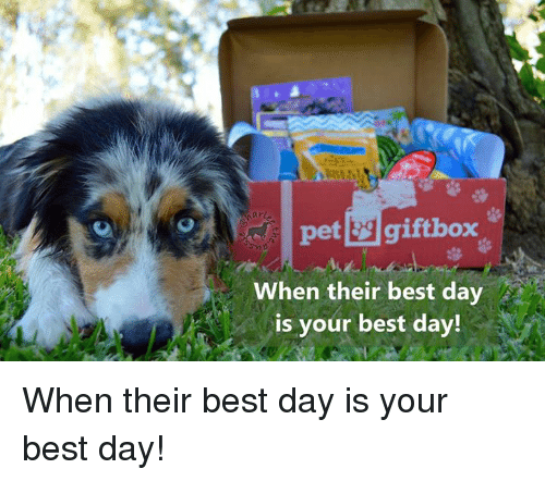 Memes, 🤖, and Best Day: arl  pet giftbox  When their best da  is your best day! When their best day is your best day!