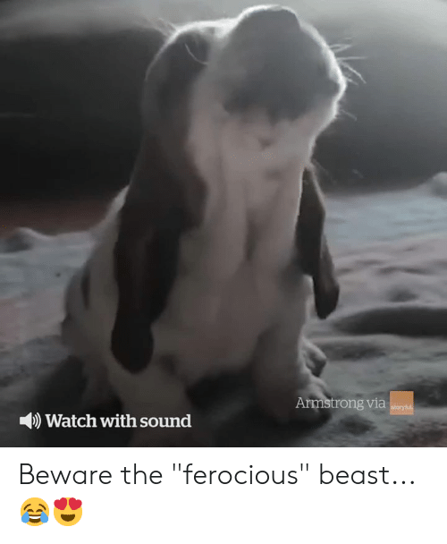 """Ferocious: Armstrong via  storyful  Watch with sound Beware the """"ferocious"""" beast... 😂😍"""