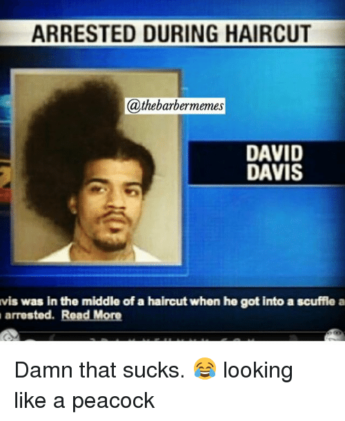 Funny, Haircut, and Haircuts: ARRESTED DURING HAIRCUT  @thebarbermemes  DAVID  DAVIS  vis was in the middle of a haircut when he got into a scuffle a  arrested  Read More Damn that sucks. 😂 looking like a peacock