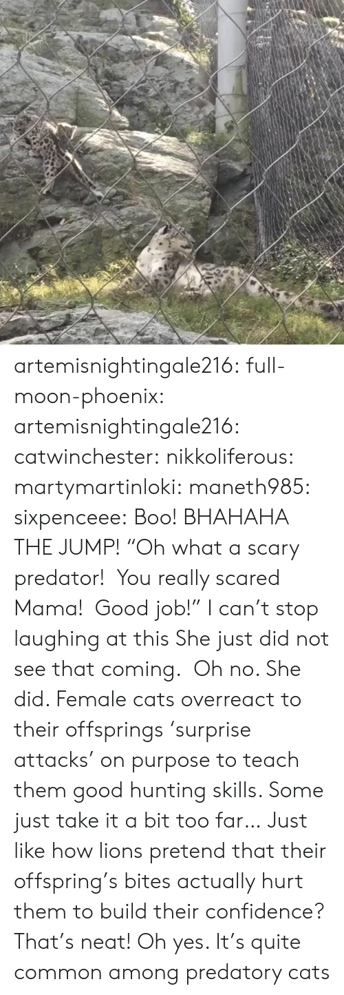"On Purpose: artemisnightingale216: full-moon-phoenix:   artemisnightingale216:   catwinchester:   nikkoliferous:  martymartinloki:  maneth985:  sixpenceee: Boo! BHAHAHA THE JUMP!  ""Oh what a scary predator!  You really scared Mama!  Good job!""   I can't stop laughing at this  She just did not see that coming.    Oh no. She did. Female cats overreact to their offsprings 'surprise attacks' on purpose to teach them good hunting skills. Some just take it a bit too far…   Just like how lions pretend that their offspring's bites actually hurt them to build their confidence? That's neat!   Oh yes. It's quite common among predatory cats"