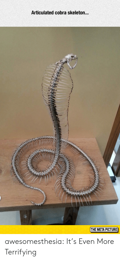 cobra: Articulated cobra skeleton...  ir  THE META PICTURE awesomesthesia:  It's Even More Terrifying