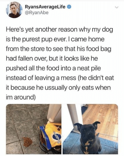 Yet Another: ARyansAverageLife  @RyanAbe  Here's yet another reason why my dog  is the purest pup ever.I came home  from the store to see that his food bag  had fallen over, but it looks like he  pushed all the food into a neat pile  instead of leaving a mess (he didn't eat  it because he ussually only eats when  im around)  Pedigre