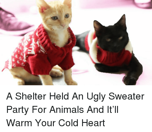ugly sweater: as A Shelter Held An Ugly Sweater Party For Animals And It'll Warm Your Cold Heart