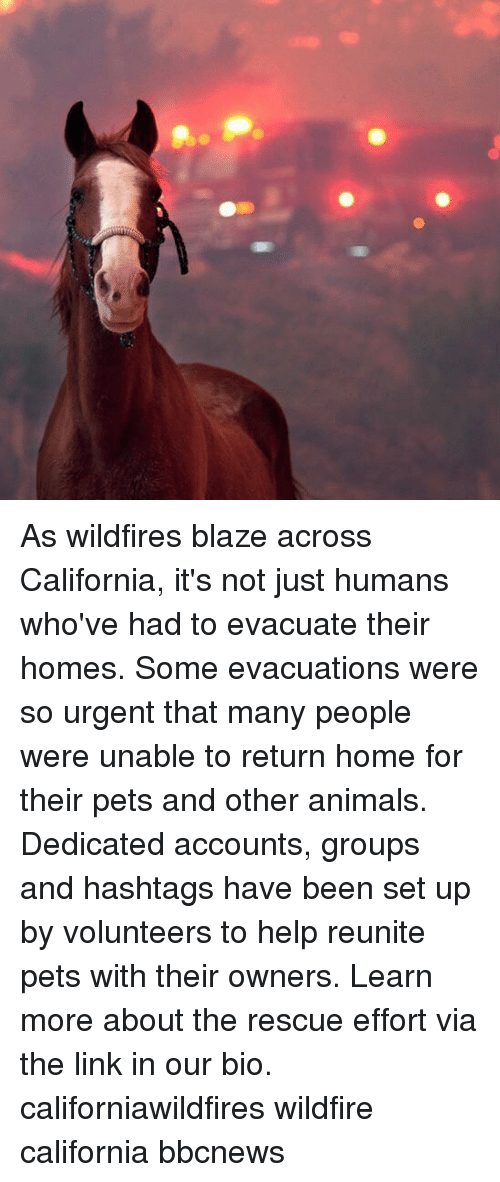 Blaze: As wildfires blaze across California, it's not just humans who've had to evacuate their homes. Some evacuations were so urgent that many people were unable to return home for their pets and other animals. Dedicated accounts, groups and hashtags have been set up by volunteers to help reunite pets with their owners. Learn more about the rescue effort via the link in our bio. californiawildfires wildfire california bbcnews